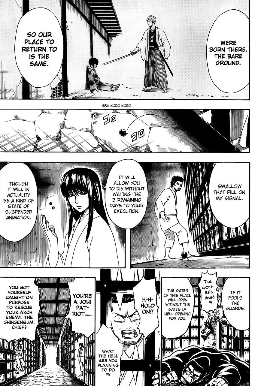 Gintama Chapter 529  Online Free Manga Read Image 7